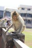 χαριτωμένος πίθηκος Στοκ εικόνες με δικαίωμα ελεύθερης χρήσης