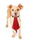 Χαριτωμένος πεινασμένος λίγο σκυλί με την πετσέτα Στοκ εικόνες με δικαίωμα ελεύθερης χρήσης