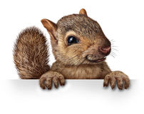 Χαριτωμένος σκίουρος διανυσματική απεικόνιση