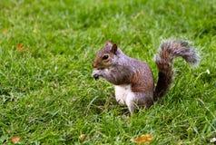 Χαριτωμένος σκίουρος στοκ φωτογραφία