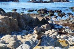 Χαριτωμένος σκίουρος Στοκ εικόνα με δικαίωμα ελεύθερης χρήσης