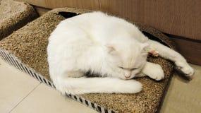Χαριτωμένος χνουδωτός άσπρος ύπνος γατών στο ξύλινο κιβώτιο στοκ φωτογραφίες