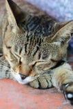 Χαριτωμένος ύπνος γατών Στοκ φωτογραφία με δικαίωμα ελεύθερης χρήσης