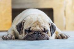 Χαριτωμένος ύπνος μαλαγμένου πηλού στο πάτωμα Στοκ εικόνα με δικαίωμα ελεύθερης χρήσης