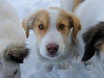 Χαριτωμένο άσπρο κουτάβι στο χιόνι Στοκ εικόνες με δικαίωμα ελεύθερης χρήσης