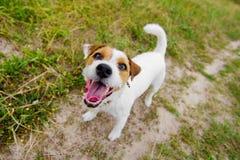 Χαριτωμένο αποφλοιώνοντας σκυλί στοκ εικόνες