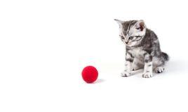Χαριτωμένο ασημένιο τιγρέ παιχνίδι παιχνιδιού γατακιών στο άσπρο υπόβαθρο που απομονώνεται Στοκ φωτογραφία με δικαίωμα ελεύθερης χρήσης