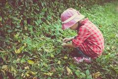 Χαριτωμένο ασιατικό παιχνίδι κοριτσιών στο πάρκο υπαίθρια κόκκινος τρύγος ύφους κρίνων απεικόνισης Στοκ φωτογραφία με δικαίωμα ελεύθερης χρήσης