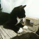 χαριτωμένο γατάκι λίγα Στοκ εικόνες με δικαίωμα ελεύθερης χρήσης