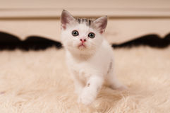 χαριτωμένο γατάκι λίγα Στοκ Φωτογραφία