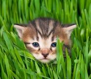 χαριτωμένο γατάκι λίγα Στοκ Εικόνα