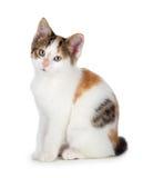 Χαριτωμένο γατάκι βαμβακερού υφάσματος σε ένα άσπρο υπόβαθρο. Στοκ φωτογραφία με δικαίωμα ελεύθερης χρήσης