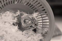 Χαριτωμένο γατάκι και άσπρα φτερά Στοκ Εικόνες