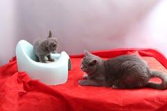 Χαριτωμένο γατάκι και τα ασήμαντα απορρίματά του Στοκ εικόνες με δικαίωμα ελεύθερης χρήσης