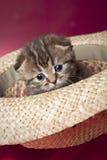 χαριτωμένο γατάκι καπέλων Στοκ Εικόνα