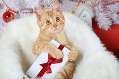 Χαριτωμένο γατάκι με ένα δώρο στα πόδια του στοκ φωτογραφία