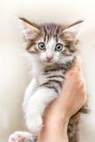 Χαριτωμένο γατάκι με τα πράσινα μάτια Στοκ φωτογραφία με δικαίωμα ελεύθερης χρήσης