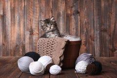 Χαριτωμένο γατάκι με τις σφαίρες του νήματος Στοκ Φωτογραφίες