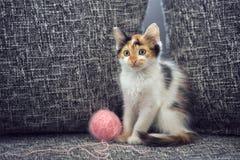 Χαριτωμένο γατάκι με το μαλλί κουβαριών Στοκ φωτογραφίες με δικαίωμα ελεύθερης χρήσης