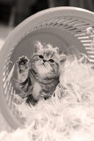 Χαριτωμένο γατάκι που λέει γειά σου, πόδι επάνω Στοκ φωτογραφία με δικαίωμα ελεύθερης χρήσης