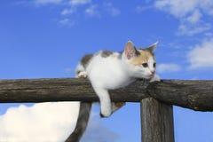 Χαριτωμένο γατάκι που έχει ένα υπόλοιπο Στοκ Εικόνες