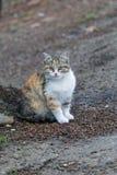 Χαριτωμένο γατάκι που εξετάζει σας Στοκ Φωτογραφία