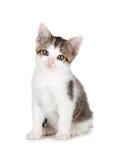 Χαριτωμένο γατάκι σε ένα άσπρο υπόβαθρο. Στοκ εικόνα με δικαίωμα ελεύθερης χρήσης
