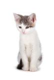 Χαριτωμένο γατάκι σε ένα άσπρο υπόβαθρο. Στοκ φωτογραφία με δικαίωμα ελεύθερης χρήσης