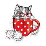 Χαριτωμένο γατάκι σε ένα φλυτζάνι Φλυτζάνι και marshmallows Στοκ φωτογραφίες με δικαίωμα ελεύθερης χρήσης