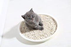 Χαριτωμένο γατάκι στα απορρίματά του στοκ εικόνες