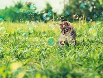 Χαριτωμένο γατάκι στη θερινή χλόη στοκ φωτογραφία με δικαίωμα ελεύθερης χρήσης