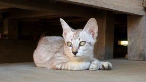 Χαριτωμένο γατάκι στο πάτωμα απόθεμα βίντεο