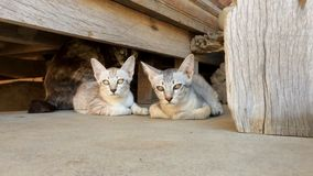 Χαριτωμένο γατάκι στο πάτωμα φιλμ μικρού μήκους