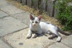 Χαριτωμένο γατάκι στο πεζοδρόμιο Στοκ Εικόνα