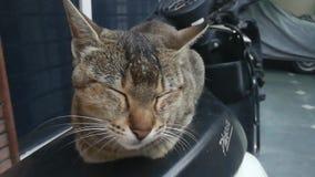 Χαριτωμένο γατάκι στο σπίτι φιλμ μικρού μήκους