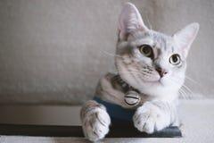 χαριτωμένο γατάκι τιγρέ στοκ εικόνες