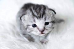 Χαριτωμένο γατάκι Το γατάκι μωρών ριγωτό σέρνεται Στοκ φωτογραφίες με δικαίωμα ελεύθερης χρήσης