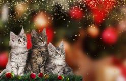 Χαριτωμένο γατάκι τρία στα Χριστούγεννα Στοκ Φωτογραφίες