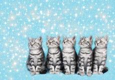 Χαριτωμένο γατάκι Χριστουγέννων με το γατάκι Χριστουγέννων starsCute Στοκ εικόνα με δικαίωμα ελεύθερης χρήσης