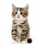χαριτωμένο γατάκι στοκ φωτογραφίες