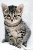 χαριτωμένο γατάκι Στοκ Εικόνα