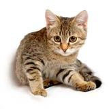 Χαριτωμένο γατάκι. Στοκ εικόνα με δικαίωμα ελεύθερης χρήσης