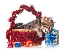 Χαριτωμένο γατάκι Στοκ φωτογραφία με δικαίωμα ελεύθερης χρήσης