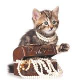 Χαριτωμένο γατάκι Στοκ Εικόνες