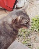 Χαριτωμένο γατάκι lil στοκ εικόνα με δικαίωμα ελεύθερης χρήσης