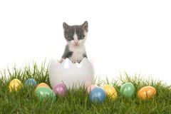 Χαριτωμένο γκρίζο και άσπρο γατάκι γατών μωρών σε ένα άσπρο αυγό στη χλόη με τα χρωματισμένα αυγά Πάσχας Στοκ εικόνα με δικαίωμα ελεύθερης χρήσης