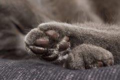 χαριτωμένο γκρίζο πόδι Στοκ εικόνες με δικαίωμα ελεύθερης χρήσης