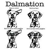 Χαριτωμένο δαλματικό σκυλί με τα προστατευτικά δίοπτρα και τα αυτιά μοτοσικλετών που χτυπούν στον αέρα απεικόνιση αποθεμάτων