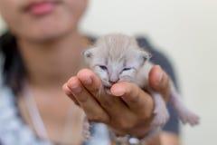 Χαριτωμένο εσωτερικό νεογέννητο γατάκι στοκ εικόνες