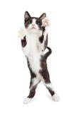 Χαριτωμένο εύθυμο γατάκι με τα πόδια επάνω στον αέρα Στοκ Εικόνες